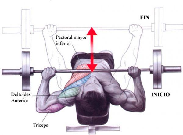 técnica ejercicio press banca